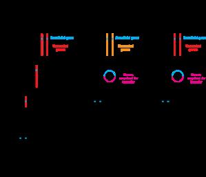 600px-Breeding_transgenesis_cisgenesis.svg